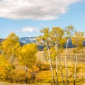 Quaking aspen are famous for the fall colors. Photo credit: Carolyn Fox. - 5 Reasons to Visit West Yellowstone, Montana this Fall