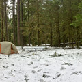 - Ipsut Creek Backcountry Campground