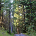 - Mineral Springs Campground