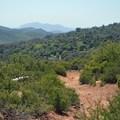 - Canyon Oak Trail