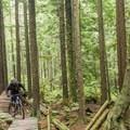 - Mount Seymour Trails: CBC
