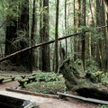- Armstrong Redwoods State Natural Reserve