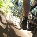 - Alsea Flow Trails