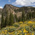 - Sierra Buttes Trail