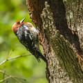 - Mount Talbert Nature Park