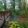 - Lake Quinault, Falls Creek Campground