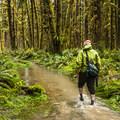 - Sams River Loop Trail