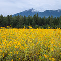 - Fort Valley Flower Field