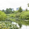 - Mercer Slough Nature Park