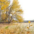 - Cowiche Mountain Trail