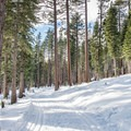 - Red Trail Snowshoe in Sugar Pine Point State Park
