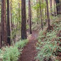 - Upper DeLaveaga Loop Hike