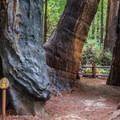 - Redwood Grove Loop Hike