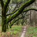 - Graham Hill Trail