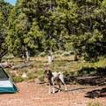 - Desert View Campground