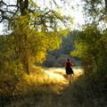 - Darrington (Salmon Falls) Trail