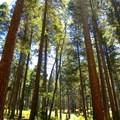 - University Falls Trail