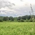 - Leland Reserve