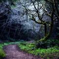 - Purisima Creek Trail