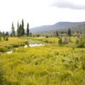 - Timber Creek Campground