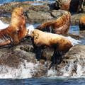 - San Juan Island: Cattle Point Sea Kayaking