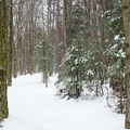 - Carpenter Road Ski Trails
