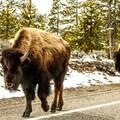 - West Yellowstone