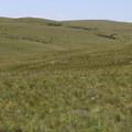 - Zumwalt Prairie Preserve