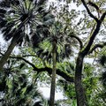 - Cathedral of Palms Trail