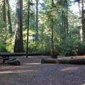 - Jedediah Smith Campground