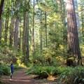 - Leiffer + Ellsworth Loop Trails