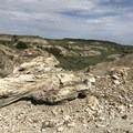 - Petrified Forest Loop Trail
