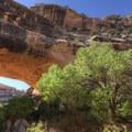 - Natural Bridges National Monument