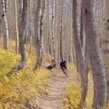 - Wasatch Crest Mountain Bike Trail