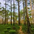 - Torreya Trail