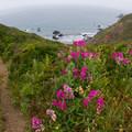 - Coastal Trail, Rodeo Beach to Muir Beach