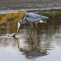 Santa Barbara has an underratred birding scene.- Going with the Flow: Seasonal Travel Tips