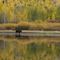 The yellow aspen at Willow Lake in Utah's Wasatch Mountains.- Going with the Flow: Seasonal Travel Tips