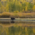 An example of timing in multiple ways: Seasonal change and good old-fashioned moose-luck.- Part 01: Timing, Composition + Inspiration