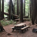 Campsites in Florence Keller Campground are set among the redwoods.- No Memorial Day Plans? Let's Camp in the Redwoods!