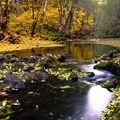 Gifford Pinchot National Forest, Washington- Five Reasons Wildlife Appreciate National Forests