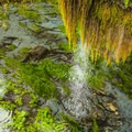 Taft Creek along the Hall of Moss Trail.- Wednesday's Word - Quillayute