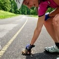 Helping a turtle cross the road at Land Between the Lakes National Recreation Area. - Woman In The Wild: Sarah Connette