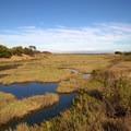 Heron's Head Park. (Photo courtesy of Douglas Johnson, Save The Bay.)- Save The Bay: A Partnership for Restoration