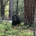 Lions, and tigers and bears!- Trail Talk: Life Lessons From the John Muir Trail
