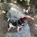 My favorite trail companion and spirit animal, Moo.- Hike Like a Girl: Periods and Peeing in the Backcountry