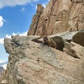 Marmots gone mad at Trail Crest.- Lightning, wildfires, and fickle friends: Lessons from Mount Whitney