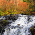 Falls en route to Angel's Rest in the Columbia River Gorge.- 20 Great Fall Hikes in Oregon