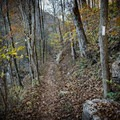 Blazes for days on the Cumberland Trail.- Hidden Gems in Tennessee's Beautiful State Parks