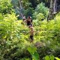 Hiking through the ancient kalo terraces of Mālama Nāpoʻopoʻo's site with Pōhāhā I Ka Lani.- Volunteering Vacations on Hawai'i's Big Island